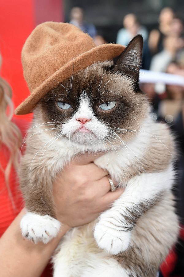 And the winner is... THE GRUMPY CAT